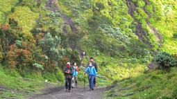 Pendaki berjalan melewati padang sabana dan edelweiss saat mendaki Gunung Merbabu di Selo, Boyolali, Jawa Tengah, Minggu (3/2). Libur Imlek dimanfaatkan warga Jawa Tengah dan Jabotabek untuk mendaki Gunung Merbabu. (Merdeka.com/Arie Basuki)