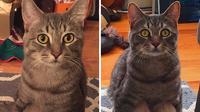 kucing duduk jongkok (foto: boredpanda)