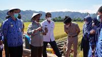 Menteri Pertanian (Mentan) Syahrul Yasin Limpo mendorong para petani padi di Desa Pinaikang, Kabupaten Pangkep, Sulawesi Selatan