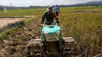 Aksi Sertu Yonathan, anggota Babinsa TNI Kodim 1412/Kolaka membantu warga membajak sawah.(doc.Liputan6.com)
