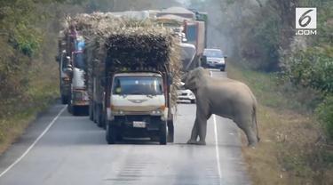 Seekor gajah bertingkah layaknya preman. Ia memberhentikan truk satu-persatu untuk memeriksa muatannya. Setelah truk dicegat, gajah mengambil beberapa isi muatan truk.