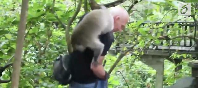 Kejadian kurang menyenangkan menimpa seorang turis yang sedang liburan ke Ubud, Bali. Tangannya tiba-tiba digigit oleh seekor monyet.