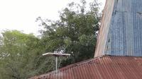 Lampu Tenaga Surya Hemat Energi (LTSHE) terpasang di rumah penduduk di Dusun Katikupelang, Desa Petawang, Kecamatan Umalulu, Kab. Sumba Timur, NTT, Rabu (21/11). Tahun 2018, sebanyak 2.024 unit akan dipasang di Pulau Sumba (Liputan6.com/HO/Hadi M Djuraid)