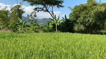 Bank Dunia Apresiasi Kemajuan Sektor Pertanian Indonesia