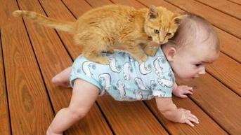 Top 3: Potret Tingkah Nyeleneh Kucing yang Bikin Enggak Habis Pikir