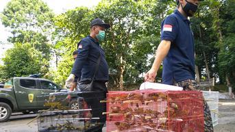Pelaku Perdagangan Satwa Liar Jenis Burung di Sidoarjo Diciduk Polisi