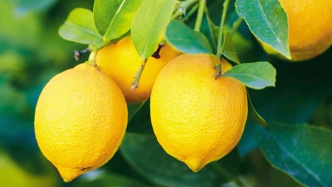 Cara Minum Air Lemon Yang Ampuh Untuk Menurunkan Berat Badan Beauty Fimela Com