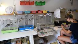 Relawan asosiasi Goupil merawat burung-burung di Rumah Sakit Margasatwa di Laroque, Prancis, Selasa (9/7/2019). Goupil merawat ratusan hewan terdampak gelombang panas yang melanda Prancis dan Eropa sejak akhir Juni. (SYLVAIN THOMAS/AFP)