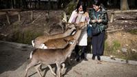 Para wisatawan memberi makan seekor rusa di kota Nara, Jepang pada 7 Desember 2018. Begitu memasuki kawasan ini, pengunjung akan disambut dengan banyak rusa yang berkeliaran bebas. (Behrouz MEHRI / AFP)