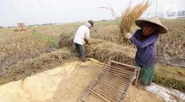 Di Tengah Pandemi, Ekspor Sektor Pertanian Alami Kenaikan