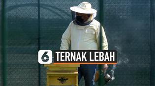 VIDEO: Kota Desainer Milan, Ternak Sarang Lebah Lebih dari 1 Juta Lebah