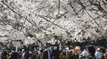 Seorang pengunjung yang memakai masker mencoba mengambil foto bunga sakura di Tokyo, Selasa (23/3/2021). Keadaan darurat virus Covid-19 di Tokyo dan tiga provinsi sekitarnya resmi dicabut pada akhir hari Minggu, 21 Maret 2021. (AP Photo/Koji Sasahara)