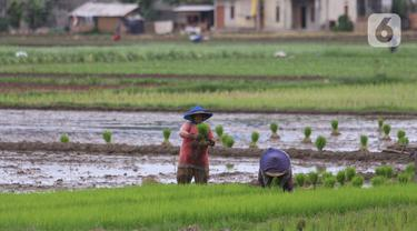 Kementan Targetkan 8,2 Juta Hektare Sawah untuk 20 Juta Ton Beras