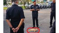 Kelakuan 5 Kucing Cari Perhatian Ini Bikin Tepuk Jidat (sumber: Instagram.com/awreceh.id)
