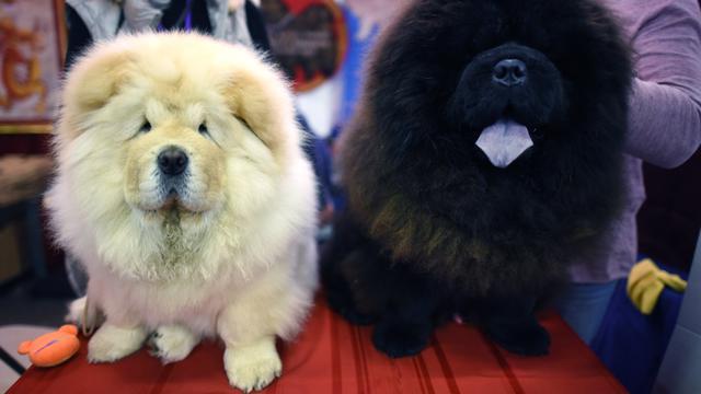 10 Ras Anjing Termahal Di Dunia Bisnis Liputan6 Com