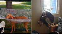7 Potret hewan sedang sial (Sumber: Brightside)