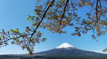 Gunung Fuji terlihat dari pinggiran kota Fujiyoshida, prefektur Yamanashi, Jepang, pada Kamis (22/4/021). Gunung Fuji, yang terletak di perbatasan antara Prefektur Yamanashi dan Prefektur Shizuoka, adalah gunung tertinggi di Jepang (3776 meter). (Behrouz MEHRI / AFP)
