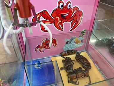 Kepiting terlihat di dalam permainan mesin capit di sebuah restoran makanan laut di Singapura, 23 Oktober 2019. Mesin capit yang dipajang restoran tersebut mendorong pengunjung untuk menangkap sendiri hewan laut yang hendak disantapnya. (Roslan RAHMAN / AFP)