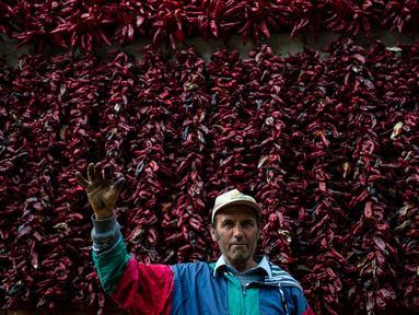 Seorang petani berpose dengan latar belakang jemuran paprika merah di Desa Donja Lakosnica, Serbia, Senin (25/9). Hampir keseluruhan warga di desa yang berjumlah kurang lebih 1300 jiwa ini memproduksi dan menanam paprika. (ANDREJ ISAKOVIC/AFP)