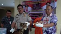 Kulit dan tulang harimau sumatera yang disita Direktorat Kriminal Khusus Polda Sumsel. (Nefri Inge/Liputan6.com)