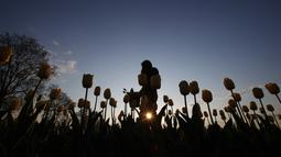 "Wanita berjalan di ladang tulip ""Tulipani Italiani"", yang ditanam pasangan Belanda Edwin Koeman dan Nitsuje Wolanios di Arese, Milan, Italia (15/4/2021). Pasangan tersebut   membuat ladang tulip ini untuk mengenang tradisi di Belanda di mana dapat memetik tulip sendiri. (AP Photo/Antonio Calanni)"