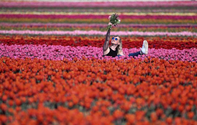 Ribuan Bunga Tulip Bermekaran di Jerman