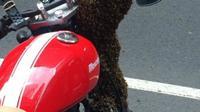 Sepeda motor tempat ratu dari kawanan lebah yang 'menginvasi' Sydney berada. (Twitter/@NSWPolice)