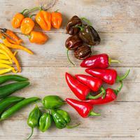 Makan Cabai Super Pedas, Berbahayakah bagi Kesehatan? (Little Hand Creations/Shutterstock)
