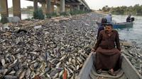 Nelayan melintas dekat ikan mas yang mati mengapung di Sungai Eufrat dekat kota Sadat al Hindiya, Jumat (2/11). Para nelayan Irak di selatan Baghdad menemukan ribuan ikan mas yang diternak di pinggiran sungai mati secara misterius. (Haidar HAMDANI/AFP)