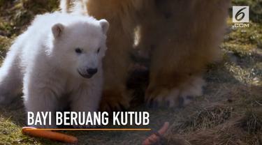 Seekor bayi beruang kutub lahir pertama kali di Inggris setelah kurun waktu 25 tahun terakhir.