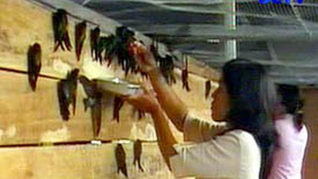 Penggemar Burung Sukses Beternak Walet News Liputan6 Com