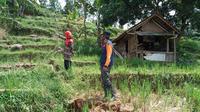 Tanah terbelah 100 meter mengancam permukiman dan sawah di Desa Kutaagung, Dayeuhluhur, Cilacap, Jawa Tengah. (Foto: Liputan6.com/BPBD Cilacap)