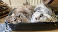 10 Potret Kucing Memilih Tempat Bersantai Ini Bikin Heran.