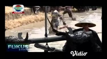 Kebo-keboan tradisi unik yang terjadi di Banyuwangi, Jawa Timur rutin di gelar setiap tahun sebagai wujud syukur atas hasil pertanian yang melimpah sebagai simbol melimpahnya panen aneka hasil pertanian yang di letakkan di setiap sudut desa.