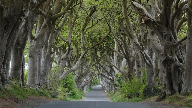 The Dark Hedges - Irlandia Utara
