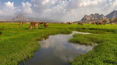 Wadi Al-Bardani, Lembah Hijau Arab Saudi yang Mirip Eropa