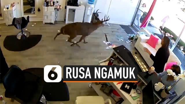 Karyawan dan pelanggan salon di New York, Amerika Serikat, dikejutkan dengan munculnya seekor rusa yang tiba-tiba mengamuk masuk ke salon.