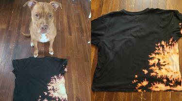Kisah seekor anjing ras yang kreatif ubah desain baju tuannya jadi lebih fashionable dengan sentuhan tie dye.