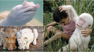 Menakjubkan Ini Penampakan 20 Hewan Albino Paling Unik Sedunia