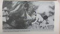 Sukarno dan Fatmawati (sumber foto: Buku Fatmawati, Catatan Kecil Bersama Bung Karno)