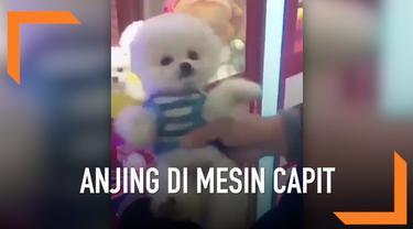 Sebuah video baru-baru ini memicu kemarahan di media sosial Twitter. Video berisi beberapa ekor anjing kecil yang masih hidup dijadikan sebuah hadiah dalam mesin capit.