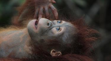 Monyet Cerdas