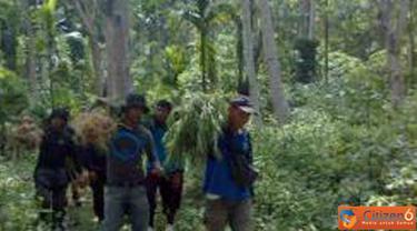Citizen6, Aceh: 100 batang pohon ganja diamankan di Polsek Jeunib sebagai tanda bukti. (Pengirim: Dadik Junaedi)
