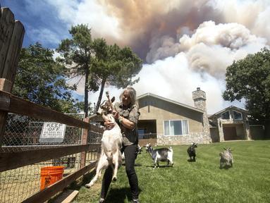 Warga membawa kambingnya saat dievakuasi akibat kebakaran yang disebut Apple Fire di dekatnya di Cherry Valley, California (1/8/2020). Sebanyak 7.800 warga dievakuasi  akibat kebakaran hutan yang menghanguskan sekitar 4.000 hektar lahan pada akhir pekan kemarin. (AP Photo/Ringo H.W. Chiu)