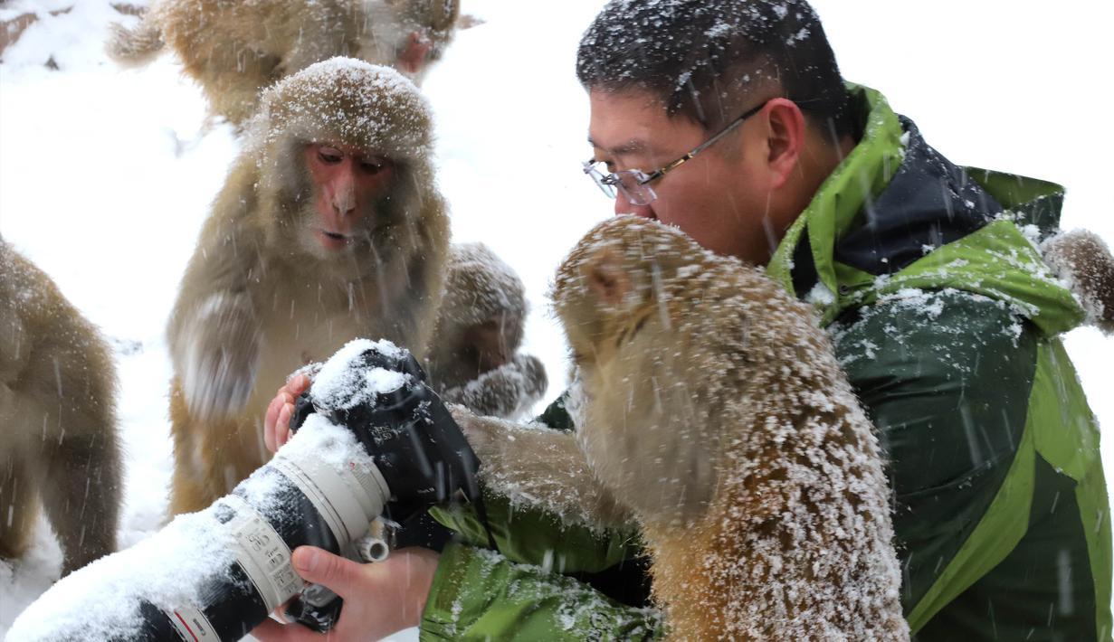 Seorang fotografer dikelilingi kera yang ingin melihat foto di kameranya saat salju turun di Wulongkou Nature Reserve, Tiongkok (6/1). Tingkah kera yang akrab dengan fotografer ini menjadi pemandangan menarik. (AFP Photo/China Out)