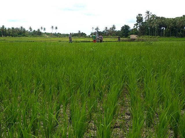 Sektor Pertanian Ri Kalah Dari Thailand Dan Vietnam Kenapa Bisnis Liputan6 Com