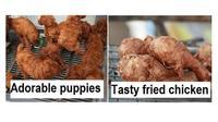 Hewan seperti makanan (Sumber: pawsplanet)