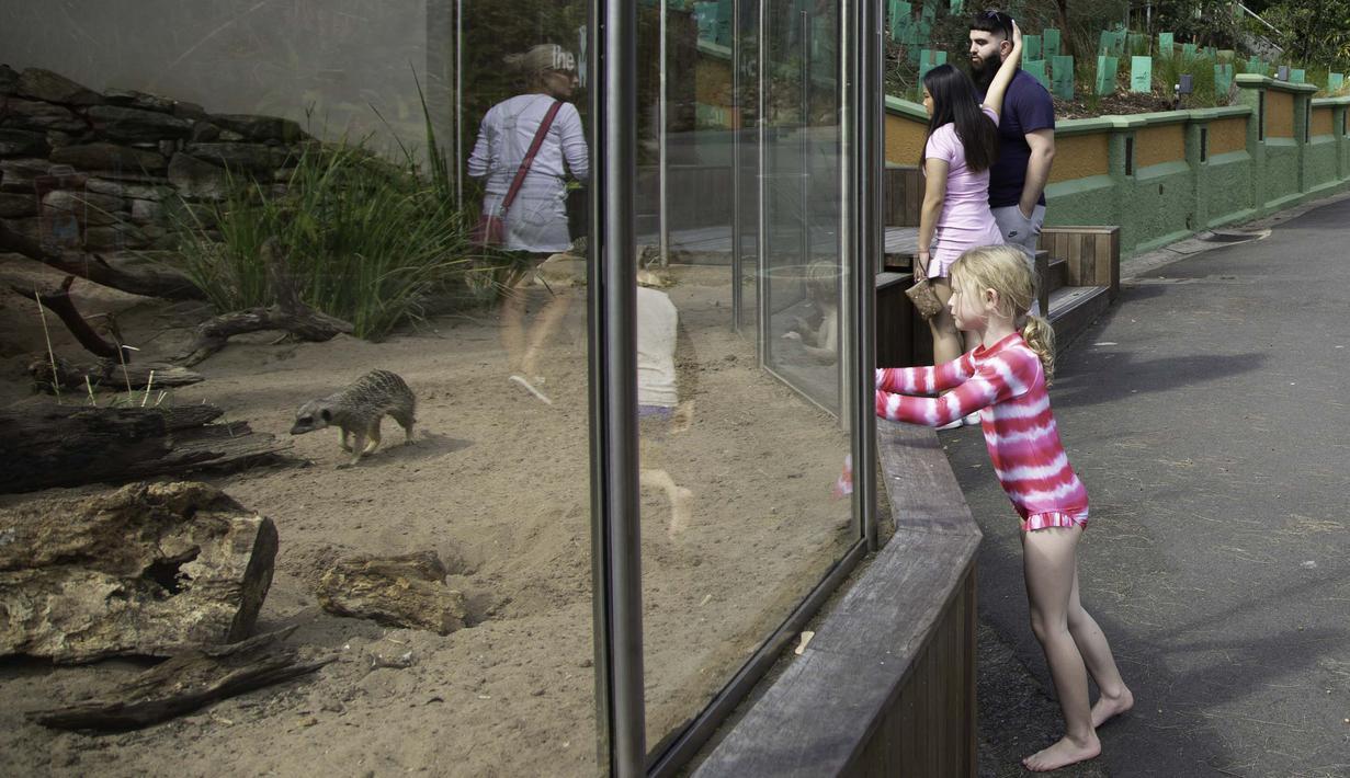 Sejumlah orang mengunjungi Kebun Binatang Taronga di tengah pandemi COVID-19, Sydney, Australia, 3 September 2020. Beberapa kebun binatang dan taman margasatwa di Sydney sudah kembali dibuka untuk umum. (Xinhua/Hu Jingchen)