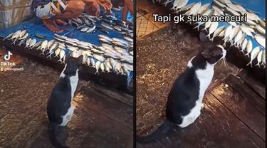 Kucing Santun Ini Rela Tunggu Diberi Ikan daripada Harus Mencuri, Aksinya Bikin Kagum