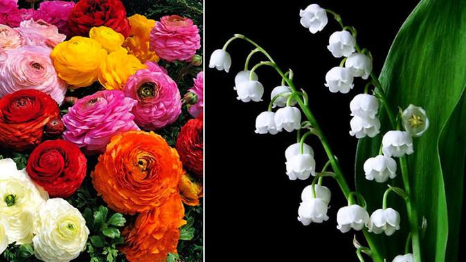 Cantik Cantik Beracun Inilah 5 Bunga Paling Mematikan Di Dunia Lifestyle Fimela Com